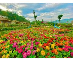 Bán 1500m2 khu đồi Hồng Kông View toàn cảnh thị trấn Mộc Châu