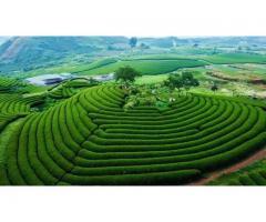 Bán 6800m2 đất Mộc Châu đón đầu quy hoạch cao tốc Hà Nội-Hòa Bình