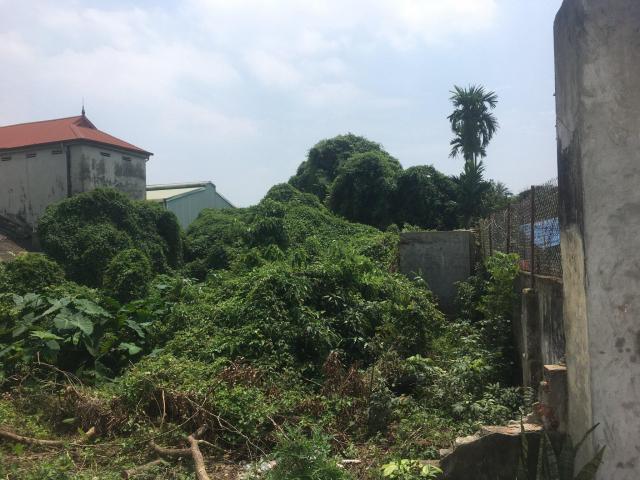 Cho thuê đất 720m2 tại thôn Đông Trạch, xã Ngũ Hiệp, Thanh Trì LH 0986806081
